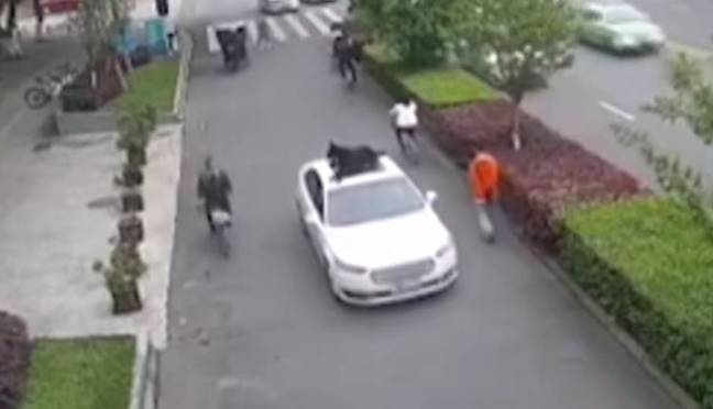 Driver Makes His Dog Sit On The Roof Of His Car